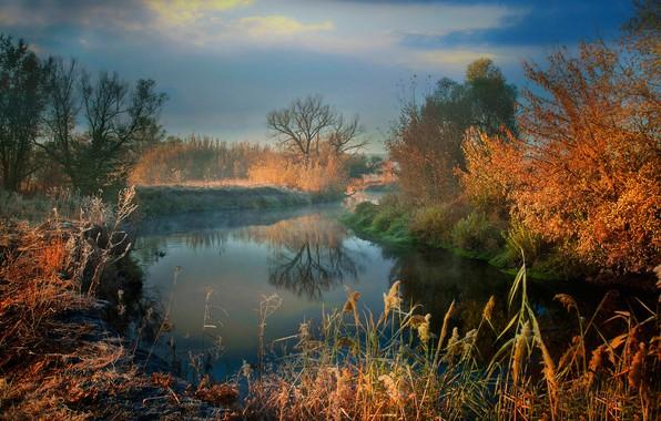 Картинка иней, осень, трава, солнце, деревья, туман, река, утро