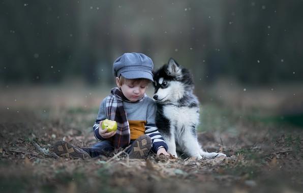 Картинка осень, природа, животное, яблоко, собака, мальчик, шарф, малыш, щенок, кепка, ребёнок, хаски
