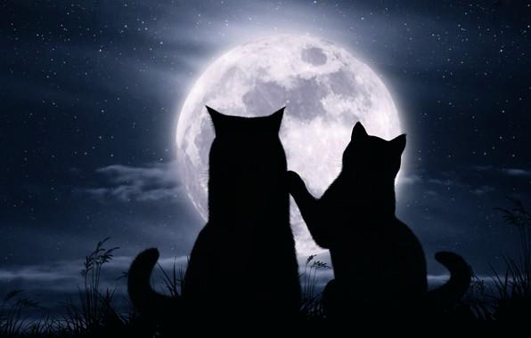 Картинка кошки, ночь, луна, романтика, звёзды