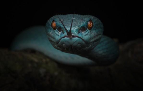 Картинка язык, глаза, мрак, змея, чёрный фон, тёмный фон