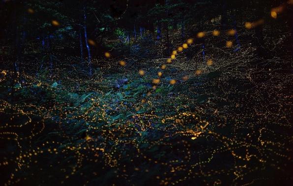 Картинка свет, ночь, природа, огни, светлячки, вечер, боке