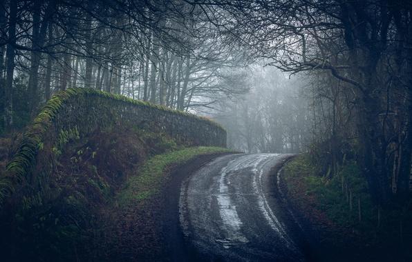 Фото обои лес, дорога, туман