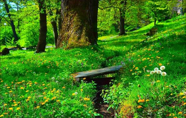 Картинка цветы, парк, Зелень, Трава, Весна, одуванчики, Grass, Green, Spring, Цветение, Flowering