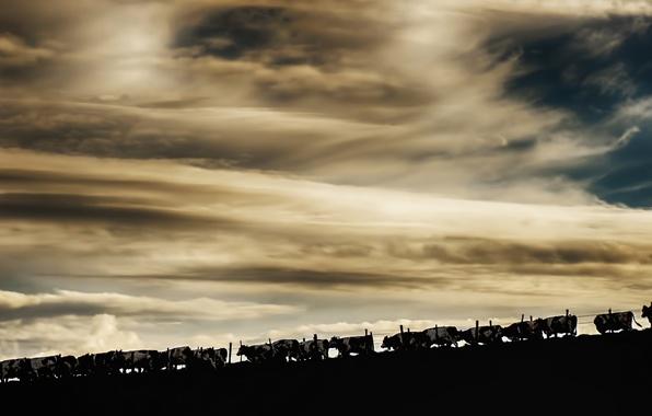Картинка небо, природа, коровы