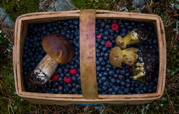 Картинка ягоды, корзина, грибы