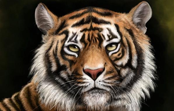 Картинка морда, тигр, фон, рисунок, хищник, арт