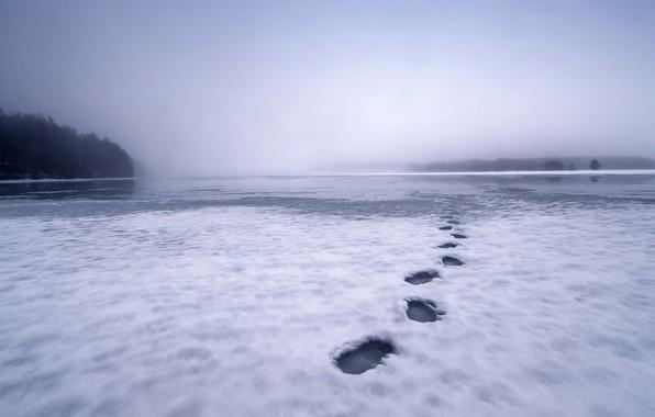 Картинка снег, следы, туман, озеро