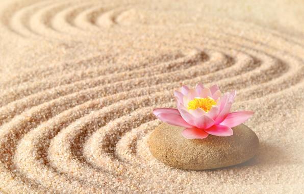 Картинки по запросу цветок лотоса обои