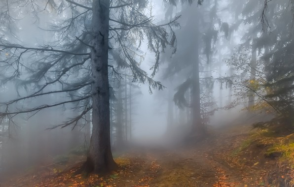 Картинка Autumn, Fog, Forest, Leaves, Twigs