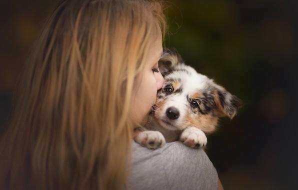 Картинка взгляд, девушка, настроение, щенок, мордашка, пёсик, Австралийская овчарка, Аусси