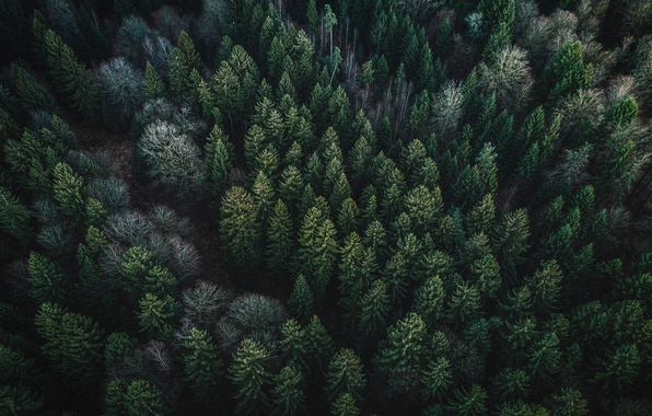 Картинка лес, деревья, природа, вид сверху