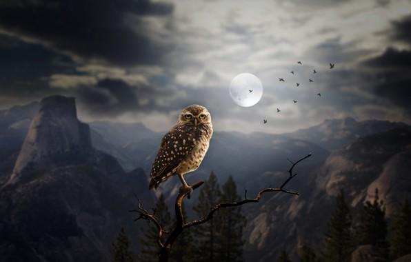 Картинка лес, деревья, горы, птицы, ночь, скалы, сова, луна, ветка, арт, силуэты