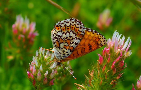 Картинка цветы, Макро, Весна, Бабочка, Flowers, Spring, Macro, Butterfly