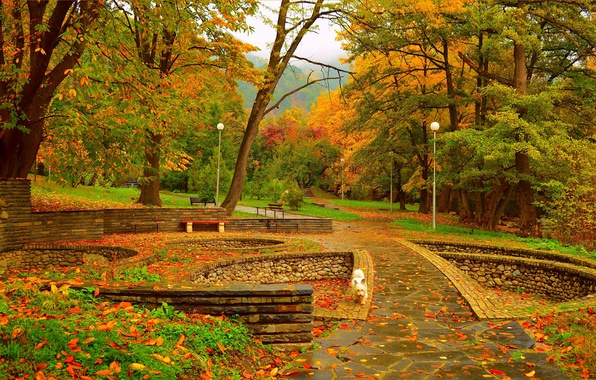Картинка Осень, Деревья, Фонари, Собачка, Парк, Fall, Листва, Park, Autumn, Colors, Trees, Leaves, Вест-хайленд-уайт-терьер, Скамейки