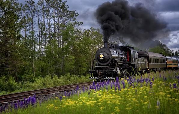 Картинка лето, природа, паровоз