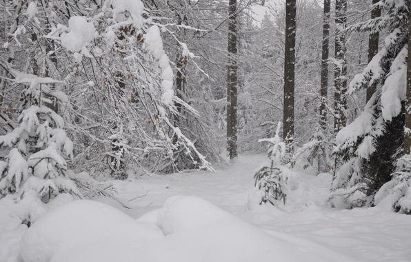 Картинка Зима, Снег, Лес, Мороз, Winter, Frost, Snow, Forest