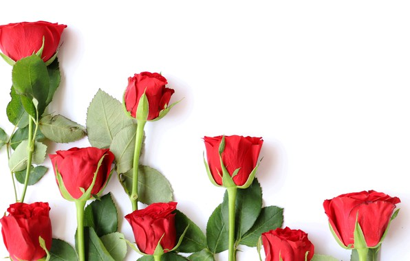 Картинка любовь, цветы, розы, букет, красные, red, wood, flowers, romantic, roses