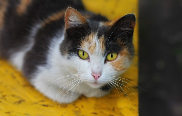 Картинка кошка, фон, мордашка