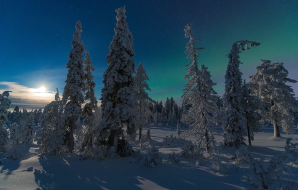 Обои зима, лес, Финляндия, Kuusamo