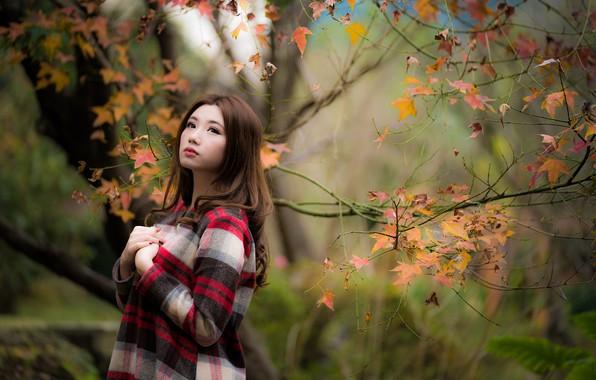 Картинка осень, листья, девушка, азиатка, милашка, боке