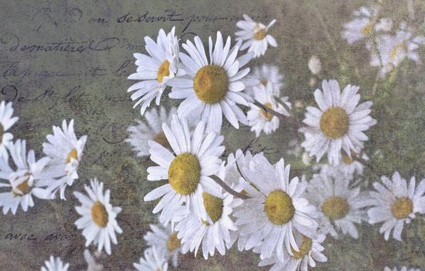 Картинка письмо, фон, ромашки