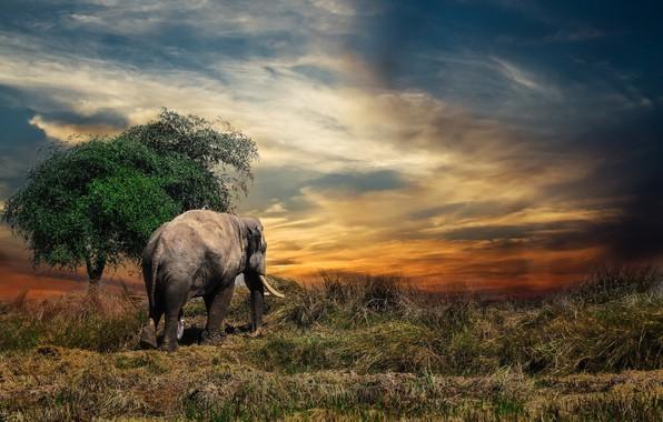 Картинка слон, Таиланд, animal