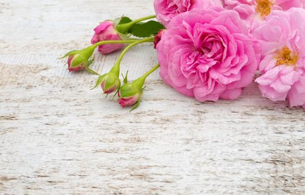 Картинка цветы, розы, букет, розовые, белые, бутоны, pink, flowers, roses, bud