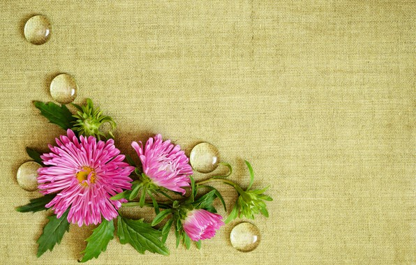 Картинка капли, цветы, фон, ткань, астры