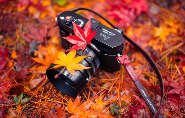 Картинка листья, природа, камера, Autumn, Harmony