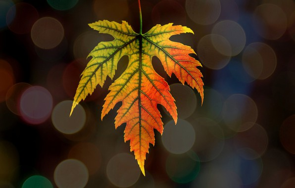 Картинка осень, природа, лист, блик