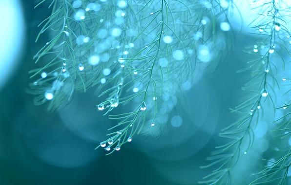 Картинка капли, макро, дождь, растение, rain, macro, drops, plant