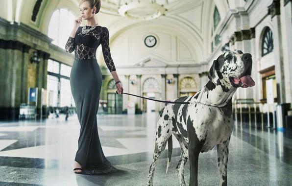 Картинка девушка, собака, макияж, фигура, платье, прическа, поводок, зал, немецкий дог