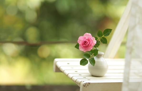 Картинка роза, стул, боке, вазочка
