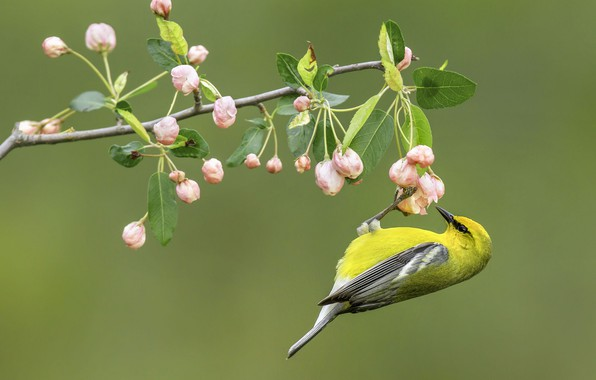 Картинка цветы, природа, птица, ветка
