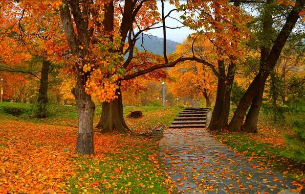Картинка Осень, Деревья, Парк, Fall, Листва, Park, Autumn, Colors, Trees, Листопад, Leaves
