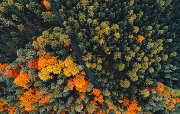 Картинка дорога, осень, лес, деревья, природа, вид сверху