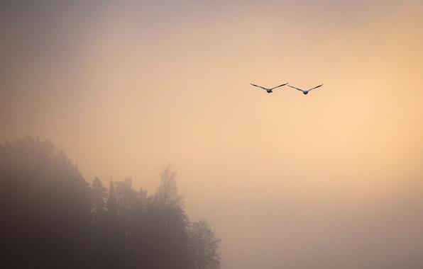 Картинка птицы, туман, полёт