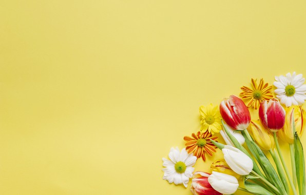 Картинка цветы, фон, Тюльпаны, хризантемы