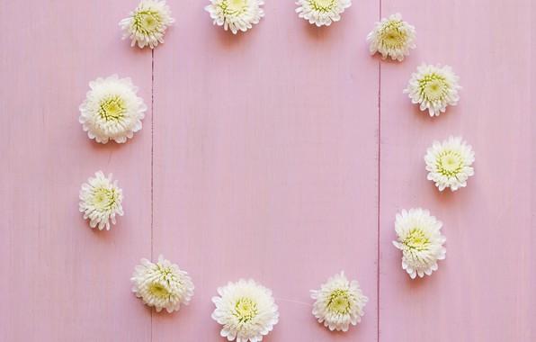 Картинка цветы, white, белые, бутоны, wood, pink, flowers, decoration, circle