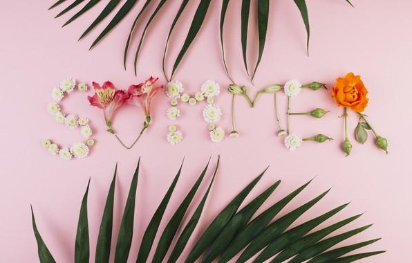 Картинка лето, листья, цветы, фон, розовый, summer, pink, flowers, композиция