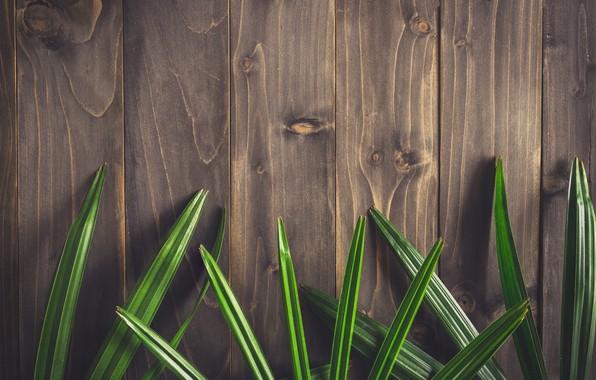 Картинка листья, фон, дерево, доски, wood, texture, leaves