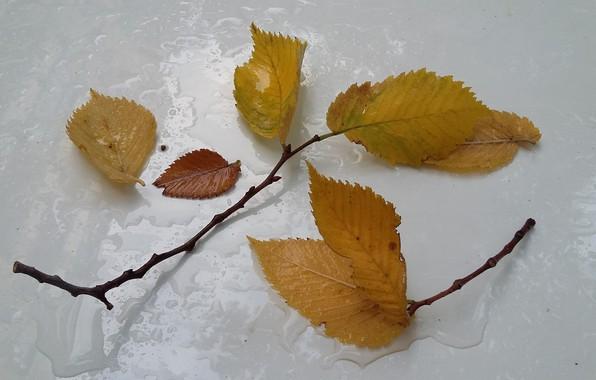 Картинка осень, дождь, минимализм, веточки, опавшие листья, капли на капоте