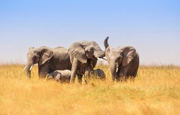 Картинки по запросу природа африка
