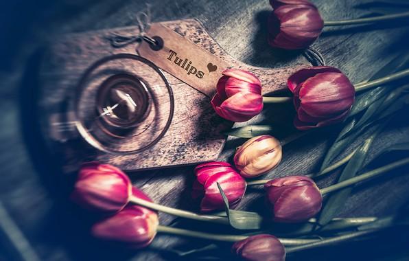 Картинка цветы, фон, цвет, тюльпаны