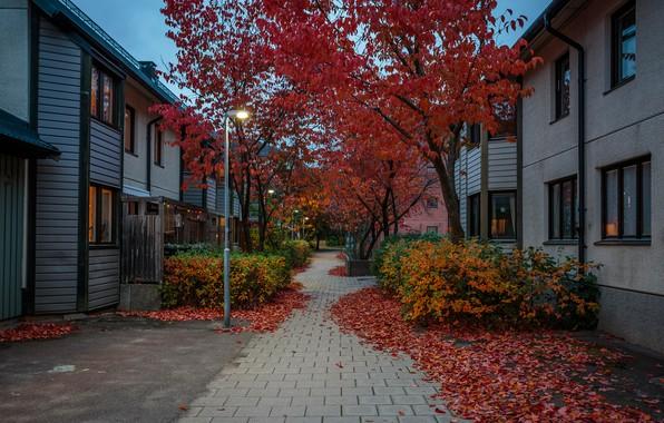 Картинка осень, листья, деревья, огни, улица, дома, вечер, фонари, Стокгольм, Швеция, тротуар, кусты