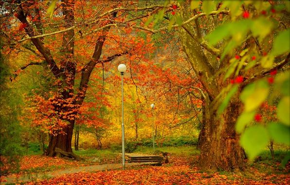 Картинка деревья, Осень, фонари, дорожка, Парк, Fall, Листва, Park, Autumn, Colors, Trees, Leaves, Path