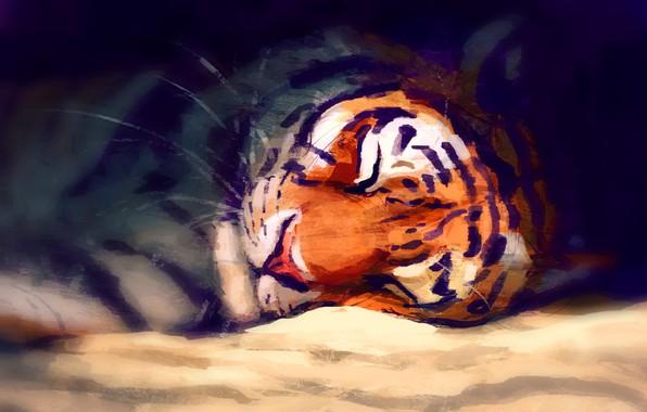 Картинка тигр, спит, by Meorow