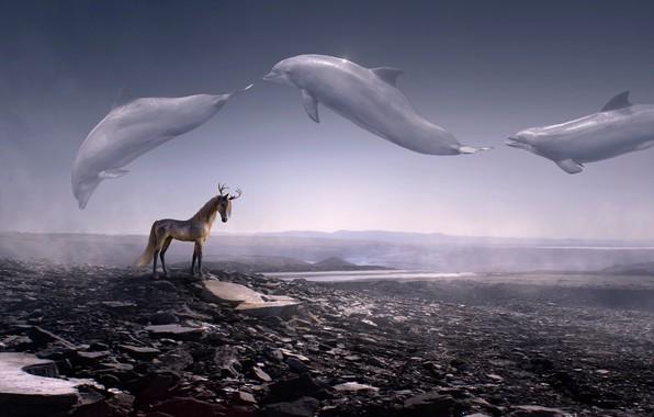Картинка животные, небо, пейзаж, горы, пространство, туман, камни, рендеринг, фантастика, конь, лошадь, фэнтези, арт, дельфины, рога, …