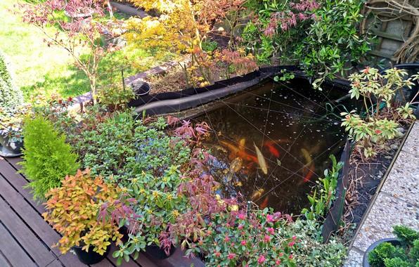 Landscape Nature Fish Carpe Colorful Erable