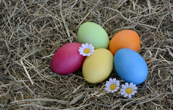 Картинка цветы, праздник, яйца, ромашка, пасха, сено